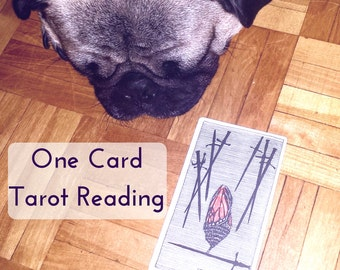 One Card Tarot Reading - Intuitive Psychic Divination Reading