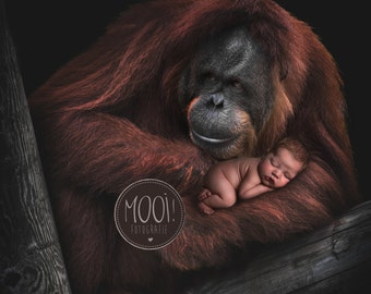 Digital Prop for Newborn - Digital background - Newborn Photography - Ape - Animal - Nature - Wildlife