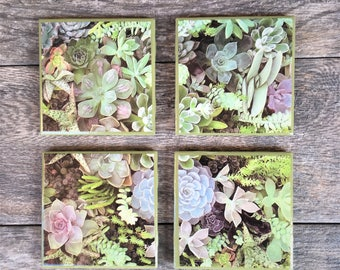 Succulents Ceramic Coasters with Green Trim