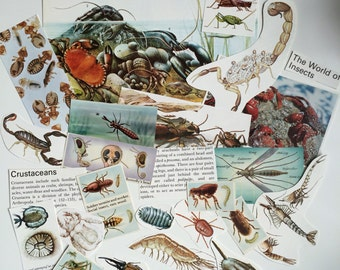 Crabs, Bugs, Insects and Arthropods Ephemera Paper Pack. Vintage 1950s and 1960s paper for scrapbooking and journaling