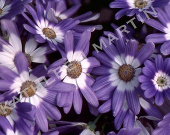 Flowers Photo Card
