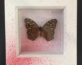 Real Taxidermy Butterfly - Horror/Blood Spatter