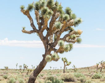 Joshua Tree, Desert Print, Southwest decor, Cactus Print, Minimalist Art, Desert landscape, Fine Art Desert Print, Joshua Tree
