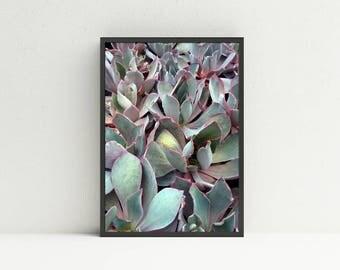 Succulent Wall Art succulent wall art | etsy