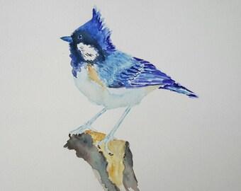 Original watercolour painting of Blue Jay, watercolour bird painting