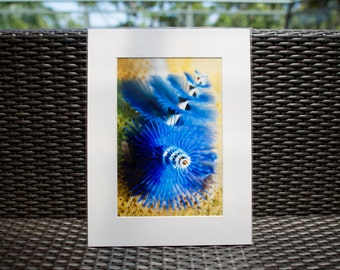 "Underwater Photography, Christmas Tree Worm, 12x16"" matted print, wall art, matted photo, 8x12 print, Underwater Print, Ocean Photo"
