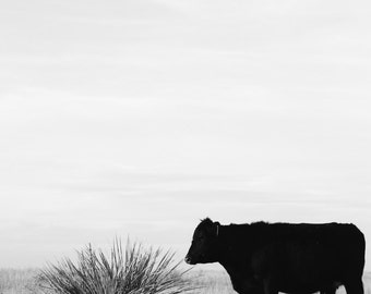 Cattle in the Pasture | Ranch Photography | Black and White