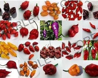 15+ World Hottest Pepper Mix Seeds 26 Varieties Organically Grown Super Hot (US ONLY)