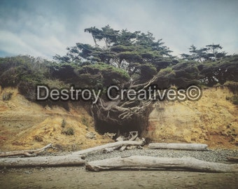 FREE SHIPPING // Shoreline Decor photography // Root Tree // Beach Scene // Oceanscape Sky // Nature // Color
