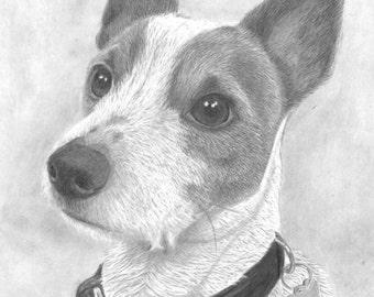Personalised pet portraits
