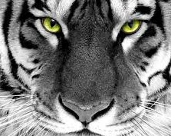 Black and White Tiger Counted Cross Stitch Kit
