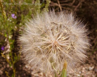 Dandelion Dreams, Photography, Home Decor