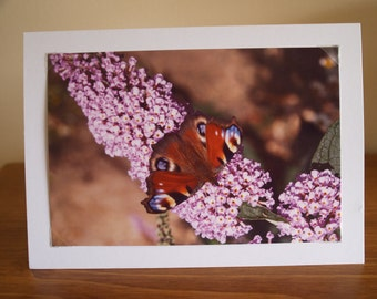 Photo Cards, Photo Note Card, Photo Greeting Card, Butterfly Card, Butterfly & Flower Card, Butterfly Greeting Card, Butterfly Note Card