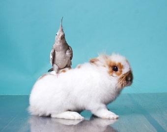 Violet rides a bunny