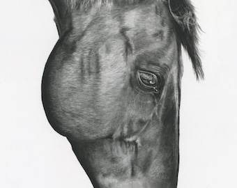 "Horse drawing in charcoal ""Copper"" 18X24"