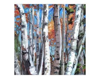 Birch Splendor