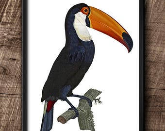 Toucan · Instant Download · Birds · Exotic ·  Wall · Printable · Digital File #96