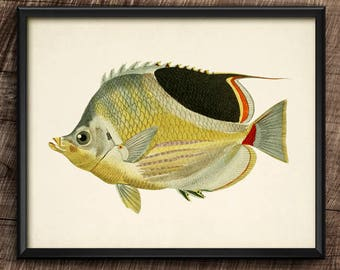 Chaetodon · Instant Download · Vintage · Fishes · Wall · Printable · Digital File #112