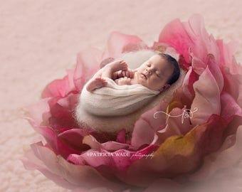 Newborn Digital Background/Rose Peony/Vintage Lace/Natural Wool