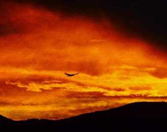 Romancing the Sky - INSTANT DOWNLOAD - Raven at Sunrise