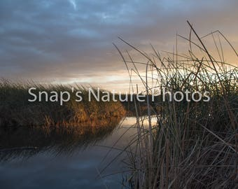 Marsh Wetland Sunrise photo
