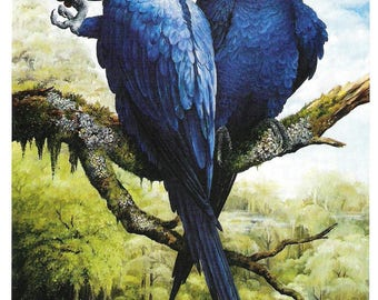 Enchantment - Print of Original Oil Painting by J N Birch - Tropical Scene