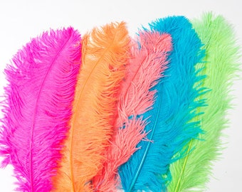 12 Pack Prime Quality Ostrich Plumes