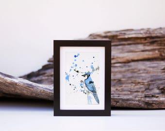 Geai bleu 4 - Petite