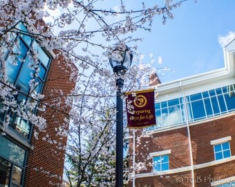 Troy Gibbs-Brown: Campus Stories