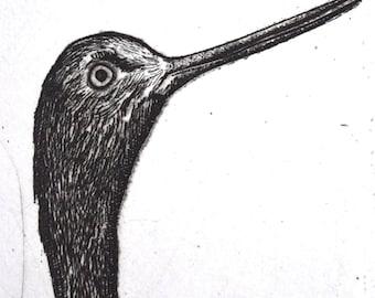 Original New Zealand Bird Etching