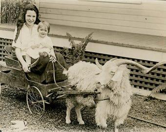 vintage photo 1919 Long Horn Angora Goat Cart Pulls Girl & Baby RPPC