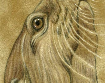 ACEO ATC  Drawing on Suede Original River Otter Wildlife Art-Carla Smale