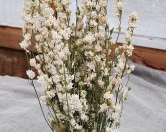 3 Bunches of  Bulk Larkspur 12 Ounces Total Shipping LATE JULY or After
