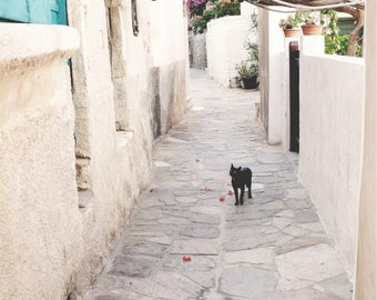 """Greece photography cat wall art flowers cobblestone street  """"Cat and Alley Flowers"""""""