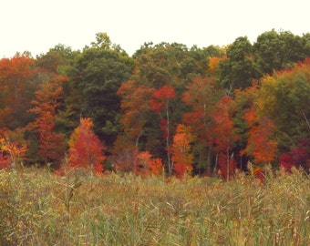 """Landscape Photography, Fall Foliage, New England, Forest, Woodland, Rustic, Red, Gold, Amber, Green, 6x9 or 8x12. """"Autumn in the Marsh""""."""