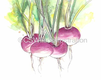 Turnips - Fine Art Print