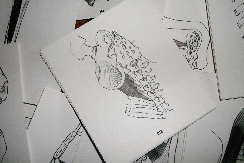 Anatomy study cards