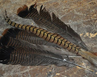 Real Beautiful Turkey and Pheasant Feathers