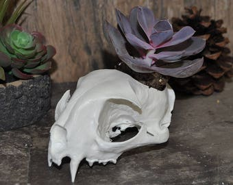 Beautiful Hand Made Lynx Skull Replica Cactus Succulentor Small Flower Pot