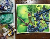 Hummingbird in grapes -watercolour study