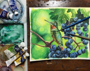 Hummingbird in grapes -watercolour study