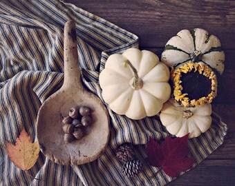 Fall Bounty ~ 11x14 photo print