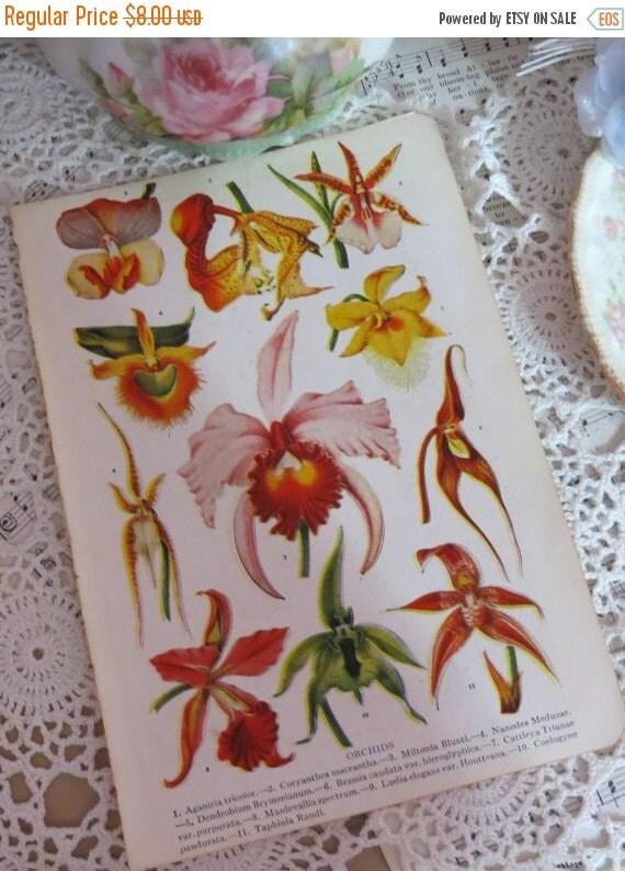 ON SALE Book of Garden Flowers-Reference-Audubon-Book Plates-IRIS