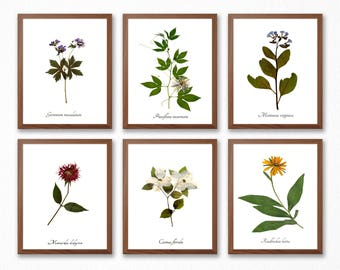Botanical Print Set - Wildflower Collection - Pressed Botanical Prints - Set of Six Flower Home Decor Prints