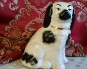 Staffordshire Spaniel England dog