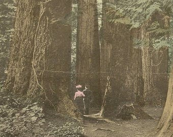 VANCOUVER BC Big Tree Stanley Forest (Stanley Park) Vintage Postcard Romantic Couple on Walk in the Woods 1919