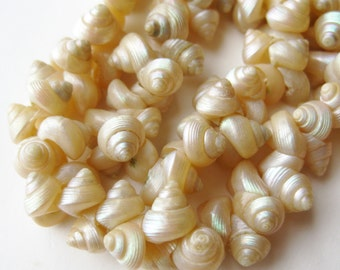Vintage 50s Tropical Island Iridescent Hawaiian South Pacific Trochus Shell Lei Exotic Necklace