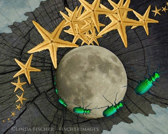 Nature Moon Night Starfish Green Bug Wood Clouds Nature Creative Photograph Wall Art Home Decor Digital Download Linda Fischer Fischerimages