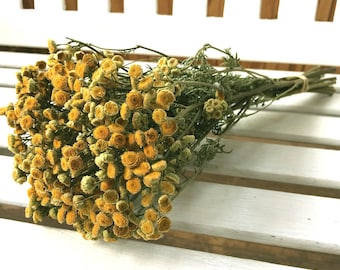 Dried Flowers Gold colored TANSY Dried Flower Bunch  Country dried flowers Prim flowers Wedding flowers  Rustic Decor Flower bunch Shabby