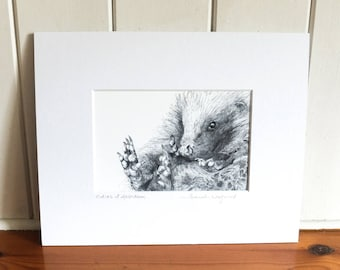 Print - Curled Up Hedgehog - Pencil Drawing